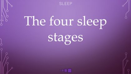 The four sleep stages